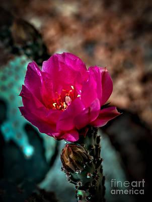 Photograph - Beavertail Cactus by Robert Bales