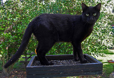 Of Black Cats Photograph - Because Its Where The Birds Are by Skip Willits