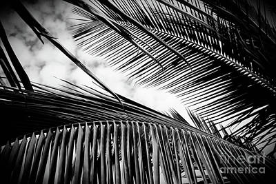 Photograph - Maui Paradise Palms Hawaii Monochrome by Sharon Mau