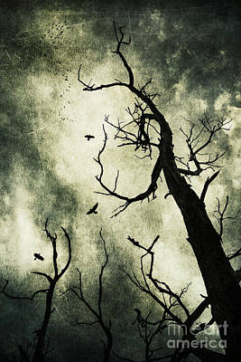 Raven Photograph - Beckoning by Andrew Paranavitana