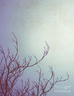 Minimalist Photograph - Beckoning Branches by Jillian Audrey Photography