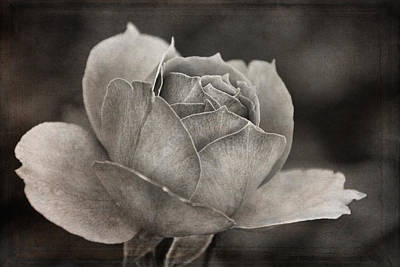 Photograph - Beckoning Rose by Theo O'Connor