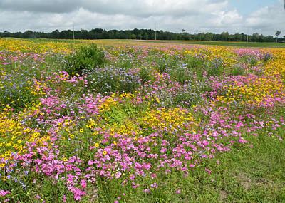 Becky Photograph - Becky's Field Of Flowers by Becky Erickson