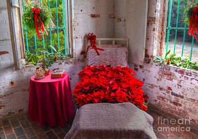 Photograph - Bed Of Poinsettias by Kathy Baccari