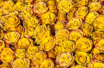 Photograph - Bed Of Yellow Roses by Connie Cooper-Edwards