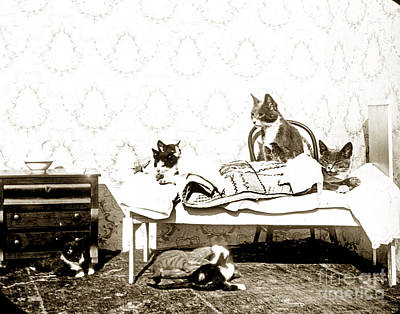 Print featuring the photograph Bed Time For Kitty Cats Histrica Photo Circa 1900 by California Views Mr Pat Hathaway Archives