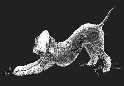 Drawing - Bedlington Terrier by Rachel Hames