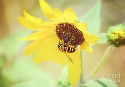 Photograph - Bee A Flower by Peggy Franz