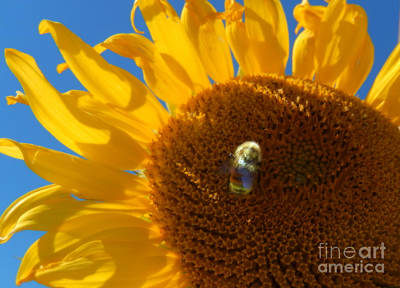 Dainty Daisies - Bee a Sunflower by Heather Coen