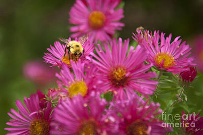 Bee Art Print by Alana Ranney