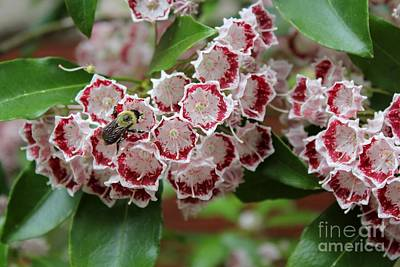 Photograph - Bee Among Blossoms by Theresa Willingham