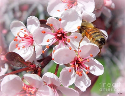 Photograph - Bee And Blossoms by Heidi Manly