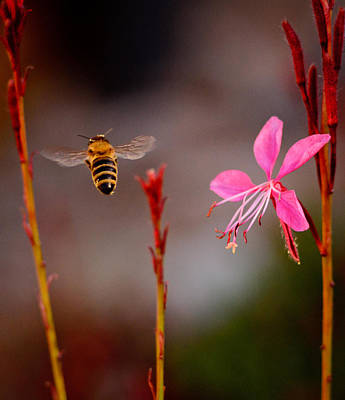 Art Print featuring the photograph Bee And Flower by Janis Knight