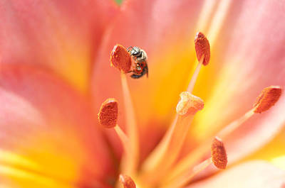 Photograph - Bee And Lily by Kathryn Whitaker