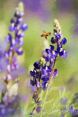 Photograph - Bee And Lupine by Marianne Jensen