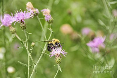 Photograph - Bee And Thistle by David Arment