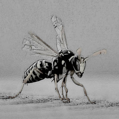 Wasp.insect Digital Art - Bee Art by Karen Biles