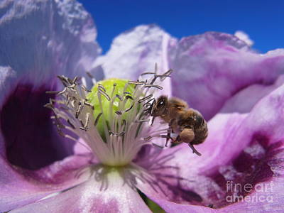 Photograph - Bee At Work by Agnieszka Ledwon