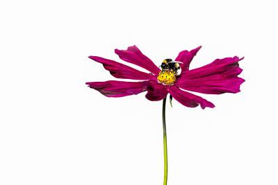 Bee At Work - Featured 3 Art Print by Alexander Senin
