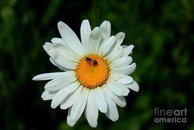 Photograph - Bee Bags by Reid Callaway