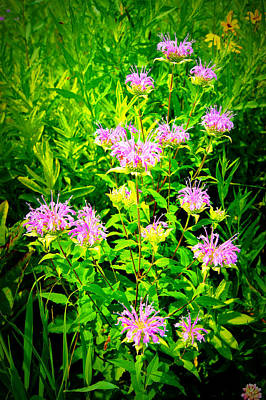 Bee Balm Of The Butterfly Gardens Of Wisconsin Art Print by Carol Toepke