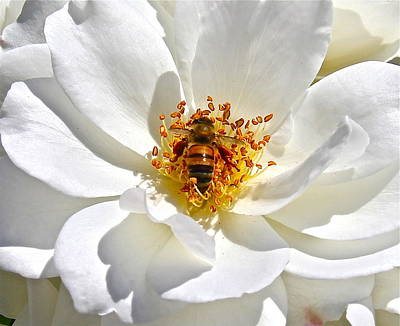 Photograph - Bee Bloom by Denise Mazzocco