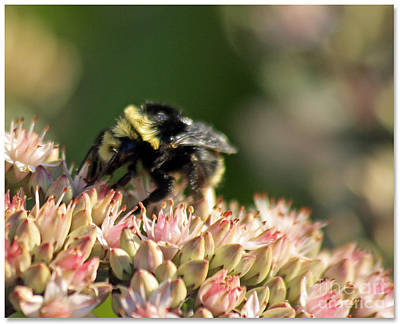 Photograph - Bee Bokeh by Chris Anderson