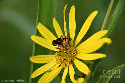 Photograph - Bee Camouflage by Susan Herber