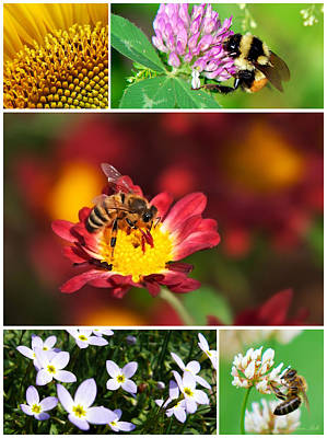Photograph - Bee Collage by Christina Rollo