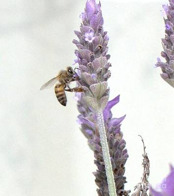 Wall Art - Photograph - Bee On Lavender by Cybele Chaves