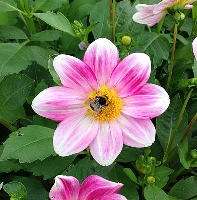 Bee Enjoying Flower Art Print