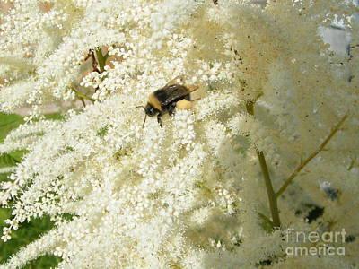 Photograph - Bee Gathering Pollen by Ann E Robson