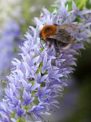 Photograph - Bee Happy 2 by Gill Billington