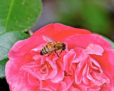 Photograph - Bee Happy by Carol  Bradley