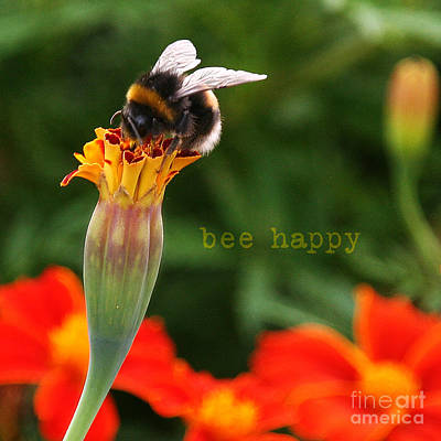 Photograph - Bee Happy by Diane Enright