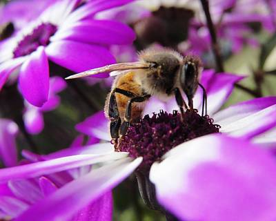 Bee Happy Print by Norma Brock