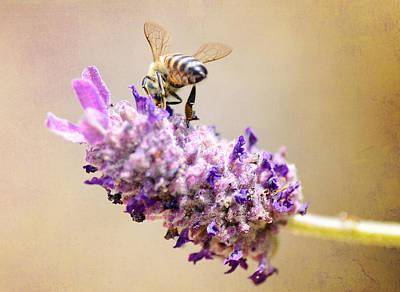 Photograph - Bee Hind 2 by Fraida Gutovich