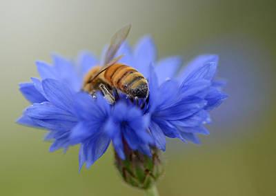 Photograph - Bee Hind 3 by Fraida Gutovich