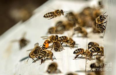 Thomas Kinkade Royalty Free Images - Bee Hive  Royalty-Free Image by Iris Richardson