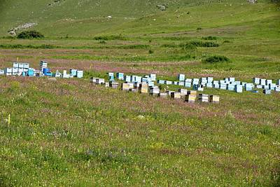 Bee Hives In Grassland Print by Bob Gibbons
