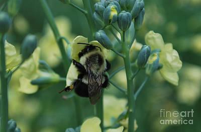 Bee Hugs Art Print