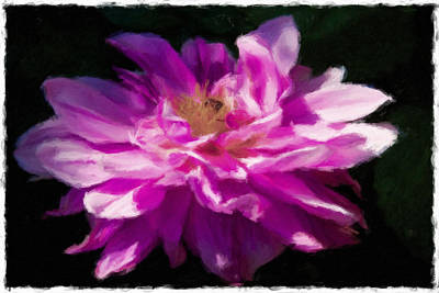 Photograph - Bee In Purple Dahlia by Alice Gipson