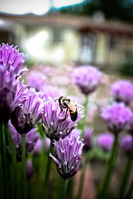 Bee In The Chives Art Print by Joel Loftus