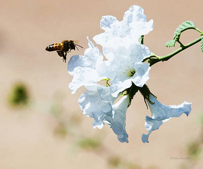 Photograph - Bee Landing On Flowers by Walter Herrit