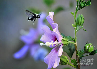 Bee Lavender Art Print by Nava Thompson