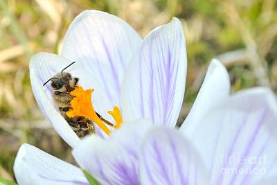 Photograph - Chilling Bee by Martin Capek