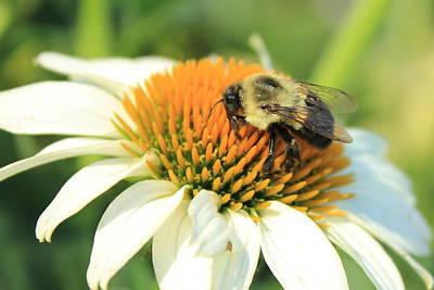Photograph - Bee Mine by Reid Callaway