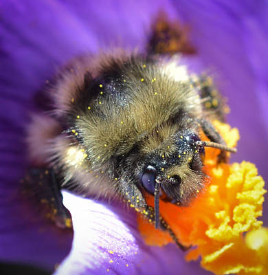 Photograph - Bee Mine by Ronda Broatch