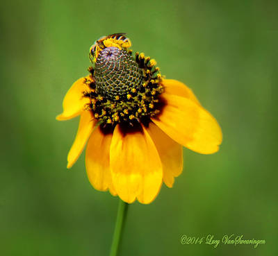 Bee My Coneflower Art Print