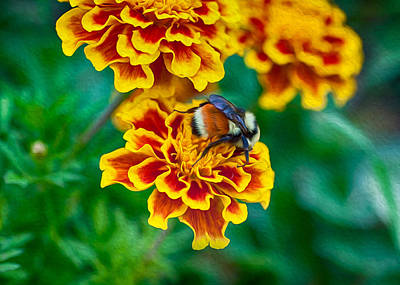 Painting - Bee My Friend Miss Marigold by Omaste Witkowski